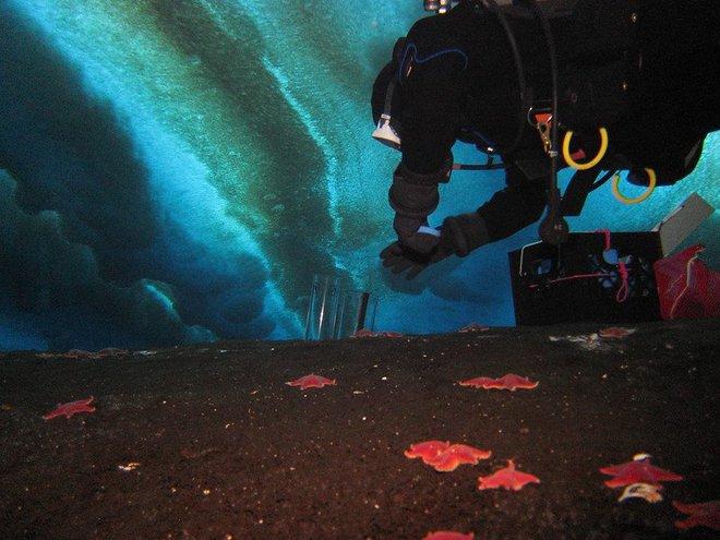 Khí độc đang rò rỉ dưới đáy đại dương: Dải màu trắng tuyệt đẹp lại mang dấu hiệu chết chóc - Ảnh 6.