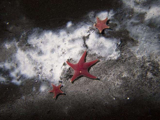 Khí độc đang rò rỉ dưới đáy đại dương: Dải màu trắng tuyệt đẹp lại mang dấu hiệu chết chóc - Ảnh 4.