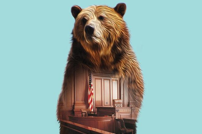Vụ án độc nhất vô nhị: Gấu xám được Tòa án Hoa Kỳ cứu thoát ngay trước giờ nổ súng! - Ảnh 9.