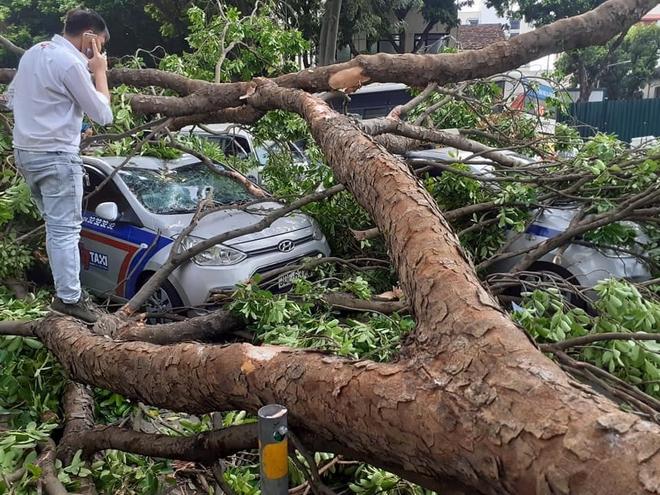 Cây xà cừ đổ gãy đè bẹp 3 ô tô trên phố Hà Nội - Ảnh 2.