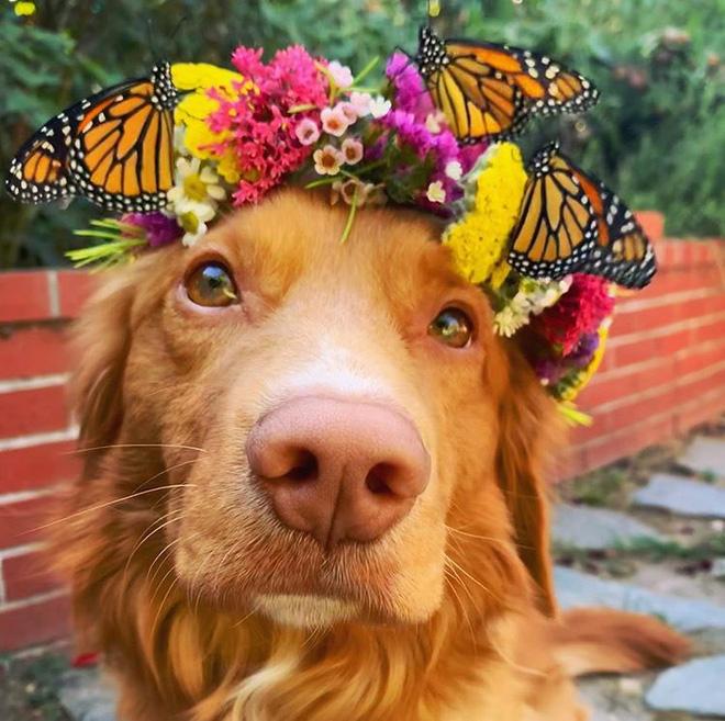 Hy hữu: Chú chó sở hữu tình bạn vô cùng đáng yêu với loài bướm vua, được gọi là vua bướm - Ảnh 10.