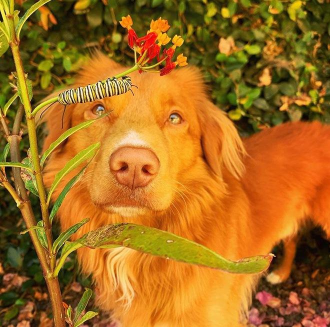 Hy hữu: Chú chó sở hữu tình bạn vô cùng đáng yêu với loài bướm vua, được gọi là vua bướm - Ảnh 14.