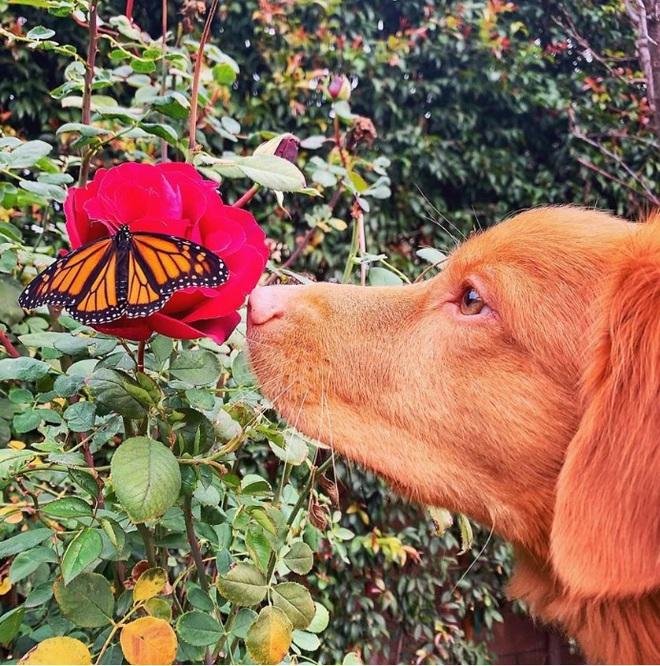 Hy hữu: Chú chó sở hữu tình bạn vô cùng đáng yêu với loài bướm vua, được gọi là vua bướm - Ảnh 2.