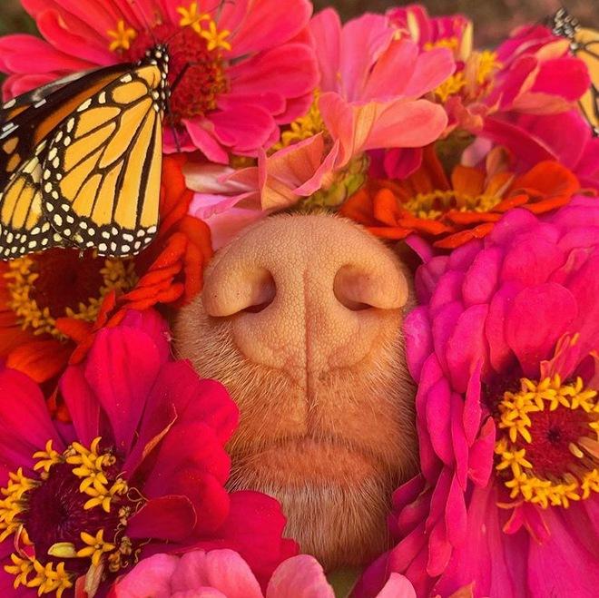 Hy hữu: Chú chó sở hữu tình bạn vô cùng đáng yêu với loài bướm vua, được gọi là vua bướm - Ảnh 8.