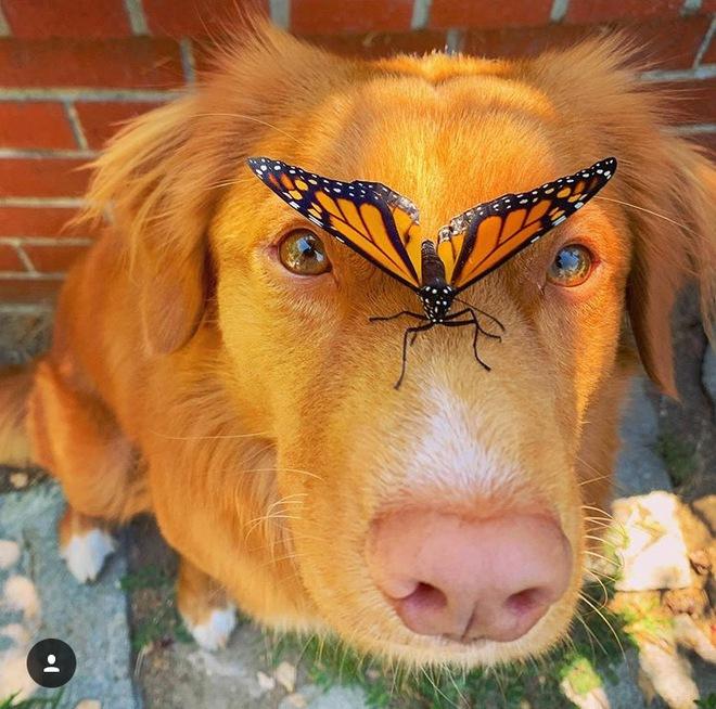 Hy hữu: Chú chó sở hữu tình bạn vô cùng đáng yêu với loài bướm vua, được gọi là vua bướm - Ảnh 1.