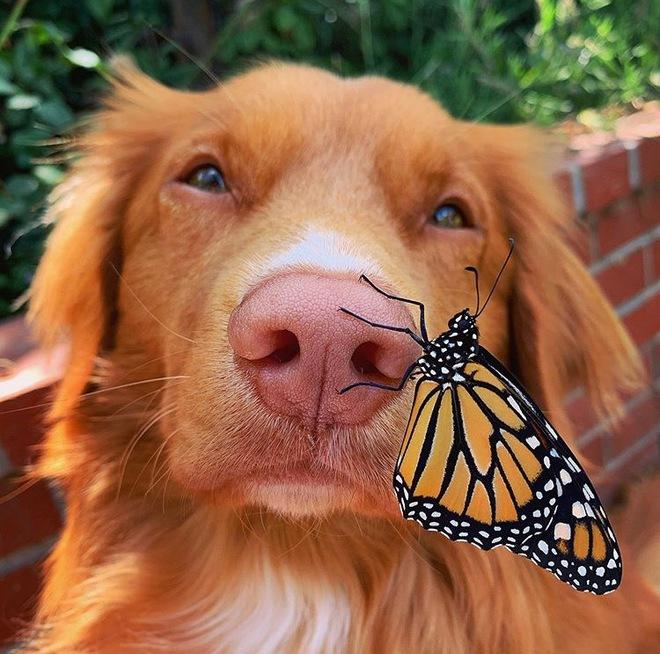 Hy hữu: Chú chó sở hữu tình bạn vô cùng đáng yêu với loài bướm vua, được gọi là vua bướm - Ảnh 6.