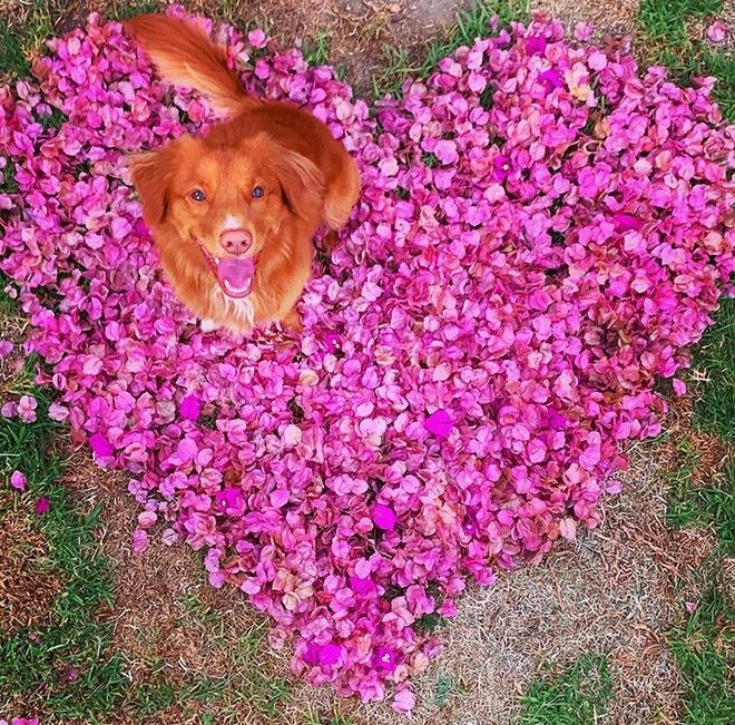 Hy hữu: Chú chó sở hữu tình bạn vô cùng đáng yêu với loài bướm vua, được gọi là vua bướm - Ảnh 13.