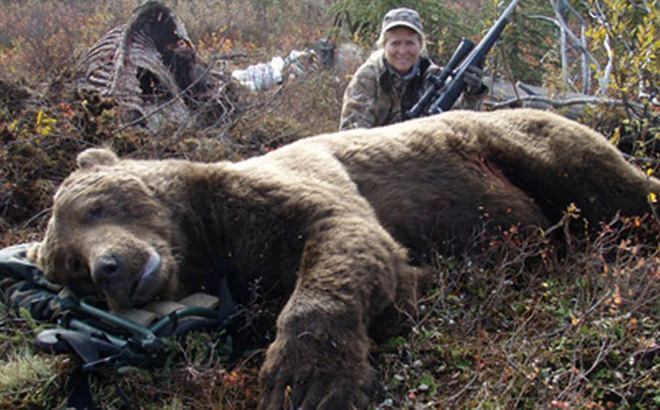 Vụ án độc nhất vô nhị: Gấu xám được Tòa án Hoa Kỳ cứu thoát ngay trước 'giờ nổ súng'!