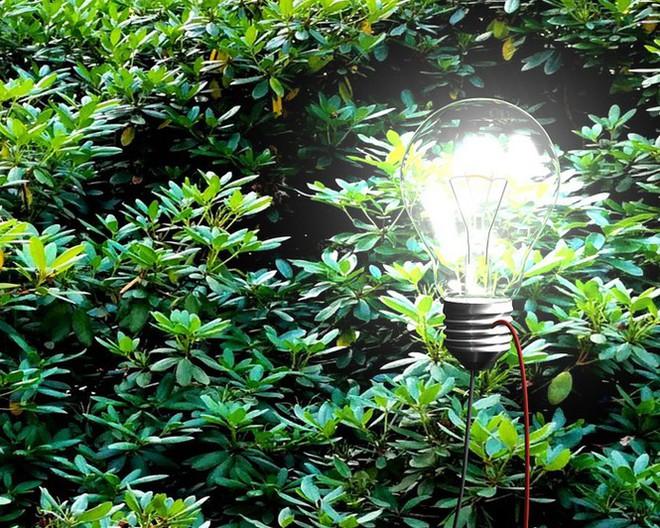 1001 thắc mắc: Vì sao trong cây có điện, sao chúng không vươn mãi lên trời? - Ảnh 1.