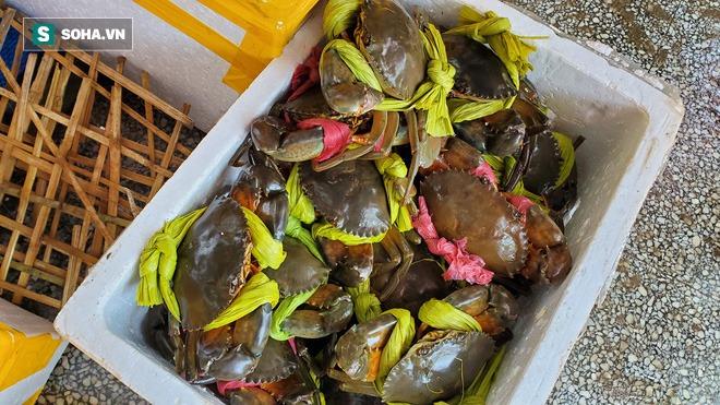 Vừa nhích giá không lâu, hàng hải sản lại giảm giá loại cua biển ngon nhất nhì miền Tây  - Ảnh 1.