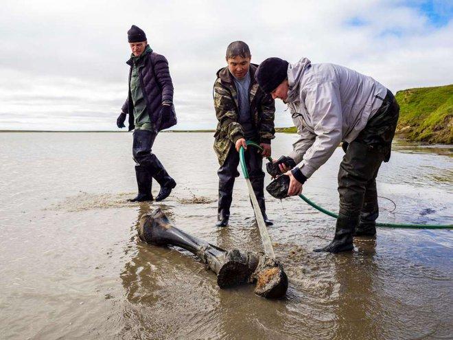 Băng tan tại Bắc Cực để lộ hài cốt voi ma mút niên đại 10.000 năm tuổi - Ảnh 2.