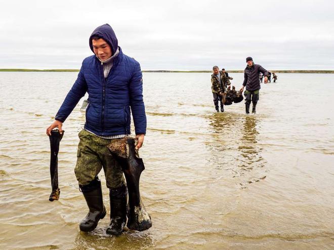 Băng tan tại Bắc Cực để lộ hài cốt voi ma mút niên đại 10.000 năm tuổi - Ảnh 3.
