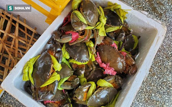 Vừa nhích giá không lâu, hàng hải sản lại giảm giá loại cua biển ngon nhất nhì miền Tây