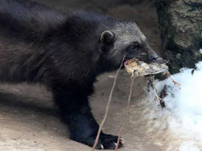1001 thắc mắc: Những loài động vật nào bốc mùi đáng sợ nhất thế giới? - Ảnh 4.