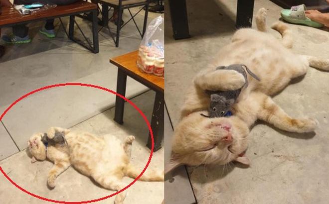 """Hí hửng mua mèo về trông nom quán ăn, anh chủ tiu nghỉu vì chọn đúng """"thần ngủ"""", đã thế còn kết thân với bọn chuột phá phách!"""