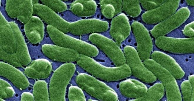 Bác sĩ cảnh báo loài vi khuẩn ăn thịt người từ món ăn khoái khẩu - Ảnh 2.