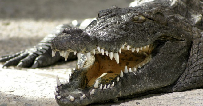 1001 thắc mắc: Loài vật nhỏ bé nào sát hại nhiều người nhất? - Ảnh 3.
