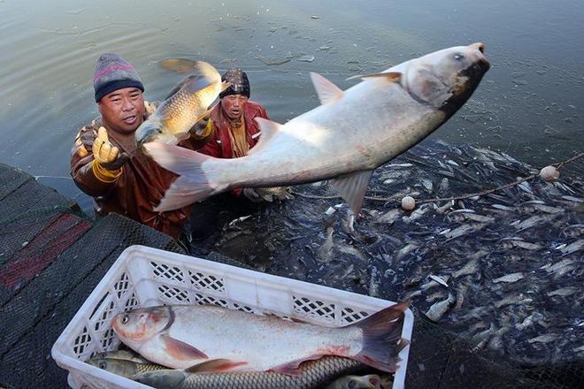 Vì sao sau khi xây xong đập Tam Hiệp, TQ phải thả vào 10.000 con cá? - Ảnh 3.