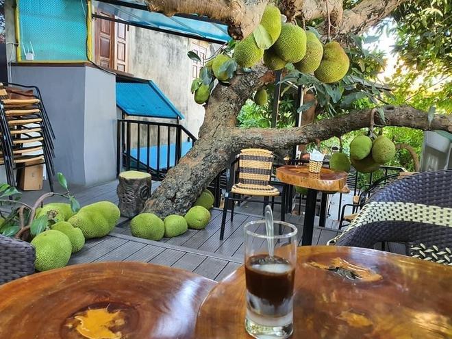 Quán cà phê độc đáo ở Tuyên Quang: Khách ngồi giữa hàng chục quả mít, mùi thơm nức mũi - Ảnh 2.