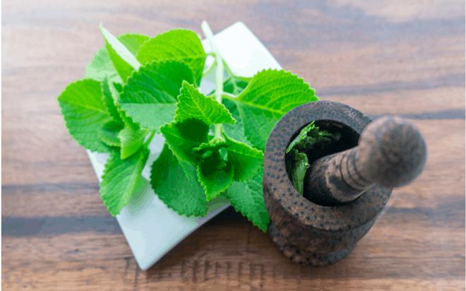 10 tác dụng tuyệt vời cho sức khỏe của lá húng chanh - Ảnh 1.