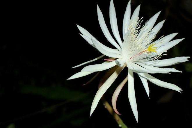 7 loài hoa đắt nhất thế giới, giá bằng cả căn biệt thự, loại đầu tiên có tiền cũng không mua được - Ảnh 1.