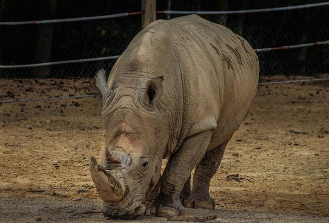 1001 thắc mắc: Những động vật nào siêu to khổng lồ nhất thế giới? - Ảnh 2.