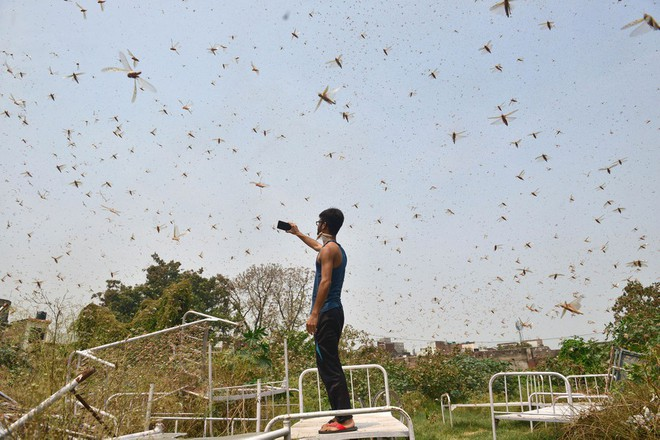 Chùm ảnh rợn người về đại dịch châu chấu đang hoành hành ở châu Phi: 'Binh đoàn' nghìn tỷ con châu chấu với sức ăn bằng 35.000 người/ngày bay kín trời - ảnh 18