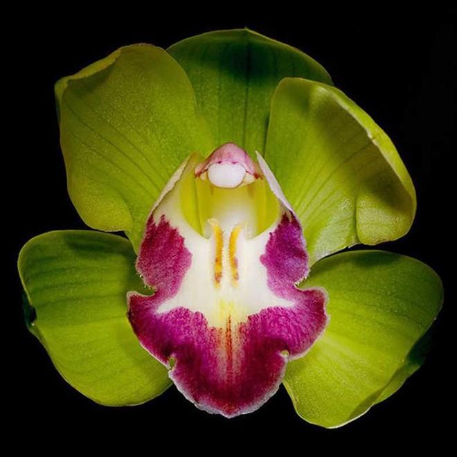 7 loài hoa đắt nhất thế giới, giá bằng cả căn biệt thự, loại đầu tiên có tiền cũng không mua được - Ảnh 3.