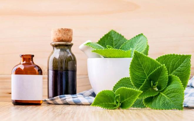 10 tác dụng tuyệt vời cho sức khỏe của lá húng chanh - Ảnh 4.