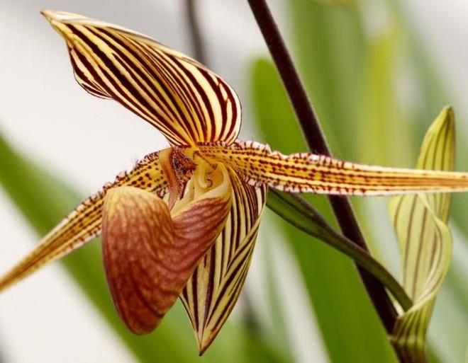 7 loài hoa đắt nhất thế giới, giá bằng cả căn biệt thự, loại đầu tiên có tiền cũng không mua được - Ảnh 4.