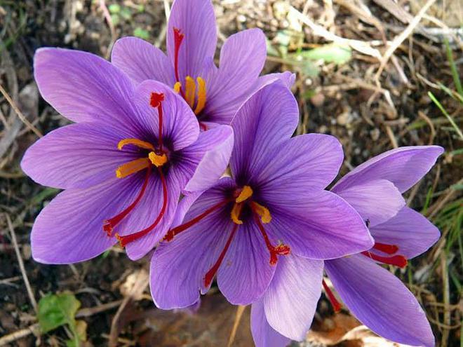 7 loài hoa đắt nhất thế giới, giá bằng cả căn biệt thự, loại đầu tiên có tiền cũng không mua được - Ảnh 6.