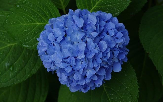 7 loài hoa đắt nhất thế giới, giá bằng cả căn biệt thự, loại đầu tiên có tiền cũng không mua được - Ảnh 7.