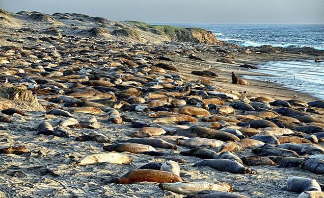 Một bệnh dịch tàn khốc đang lan tràn và tàn phá các vùng biển, không kém gì cách Covid-19 đe dọa loài người - Ảnh 3.