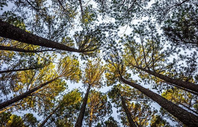 """Không chỉ con người, cây xanh cũng """"giãn cách xã hội"""" và đây là lý do - Ảnh 3."""