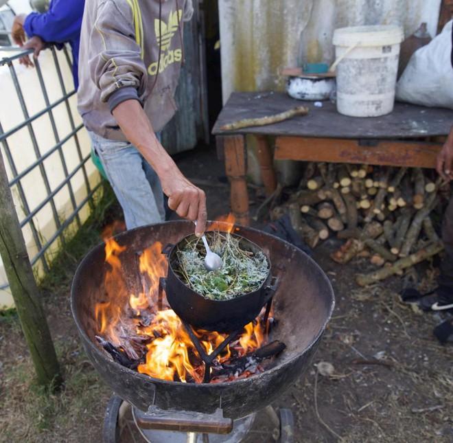 Cây Artemisia có phải là tiên dược chống Covid-19 của Châu Phi? - Ảnh 4.