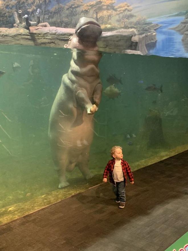 13 bức ảnh cho thấy con người nhỏ bé ra sao trước động vật - Ảnh 12.