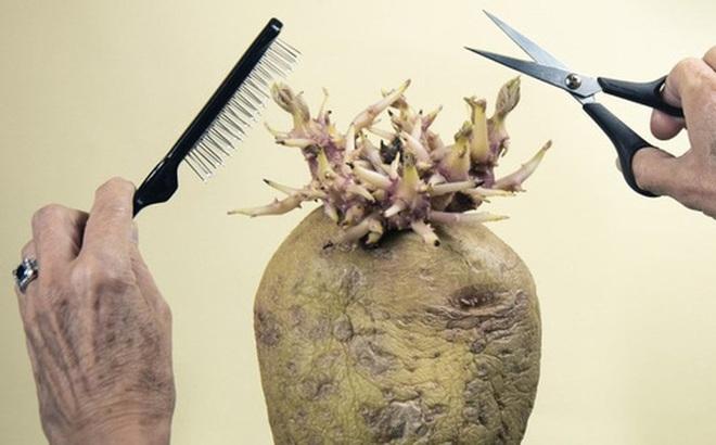 """Bức ảnh cụ ông giơ kéo cắt tóc cho """"quái vật"""" kỳ lạ nhưng sự thật lại khiến cư dân mạng phải bật cười"""