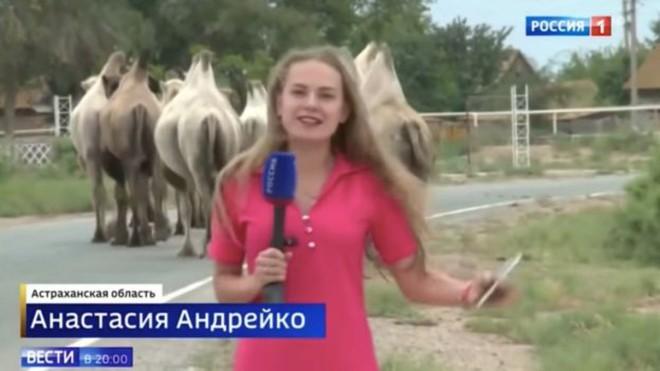 Ông cụ vui tính thả 80 con lạc đà ra khiến cả vùng hỗn loạn, người dân mất ăn mất ngủ - Ảnh 2.