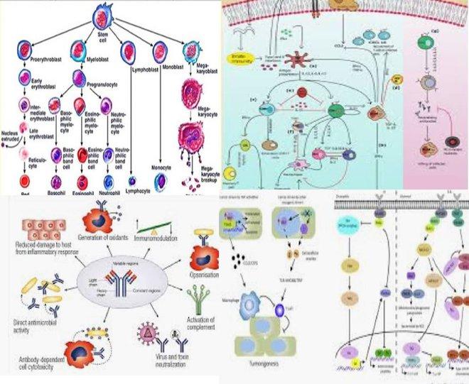 Bài viết vui gây bão của BS tuyến đầu chống dịch: Virus thì rất nham hiểm, hệ miễn dịch lại như cô người yêu phức tạp, loằng ngoằng! - Ảnh 5.