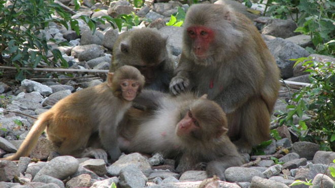 Tìm nơi sinh sống, bầy khỉ đi qua 3 ngọn núi vẫn chưa thấy ưng và hồi kết khiến con người giật mình xem lại bản thân - Ảnh 1.