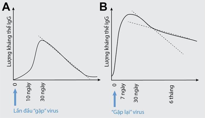 TS Nguyễn Quốc Thục Phương: Nghiên cứu từ Mỹ về kháng thể chống Covid-19 cho thấy không có gì phải sợ! - Ảnh 5.