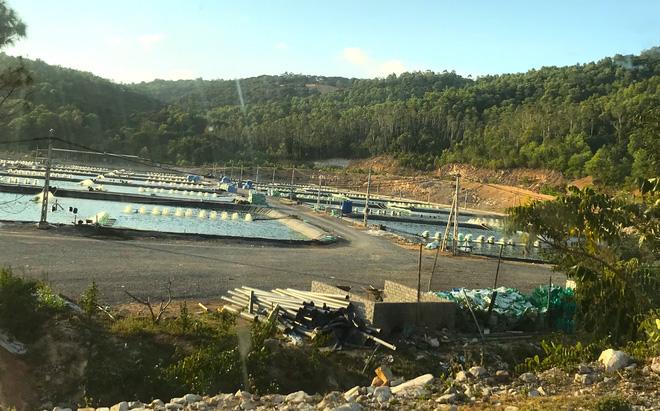 Vụ trại tôm xả thải ô nhiễm cả 1 vùng: Trang trại bất chấp dư luận tiếp tục xả thải ra biển - Ảnh 1.