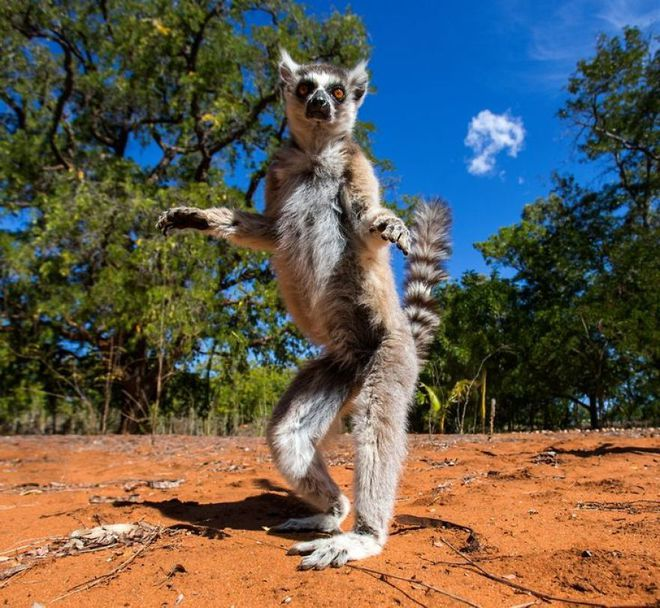 Kỳ công săn ảnh động vật hoang dã ở nơi nguy hiểm nhất thế giới - Ảnh 1.