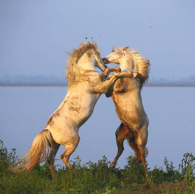 Kỳ công săn ảnh động vật hoang dã ở nơi nguy hiểm nhất thế giới - Ảnh 2.