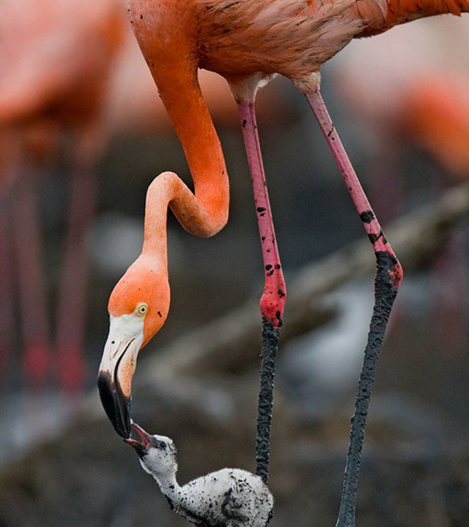Kỳ công săn ảnh động vật hoang dã ở nơi nguy hiểm nhất thế giới - Ảnh 11.