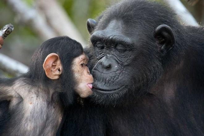 Kỳ công săn ảnh động vật hoang dã ở nơi nguy hiểm nhất thế giới - Ảnh 3.