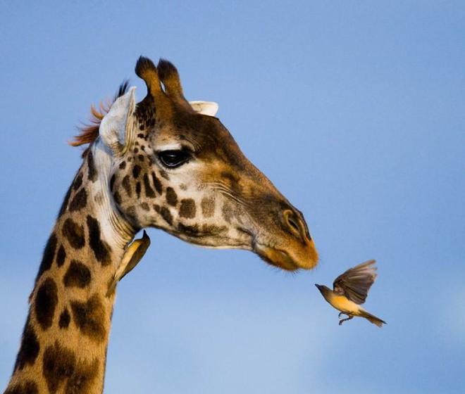 Kỳ công săn ảnh động vật hoang dã ở nơi nguy hiểm nhất thế giới - Ảnh 4.