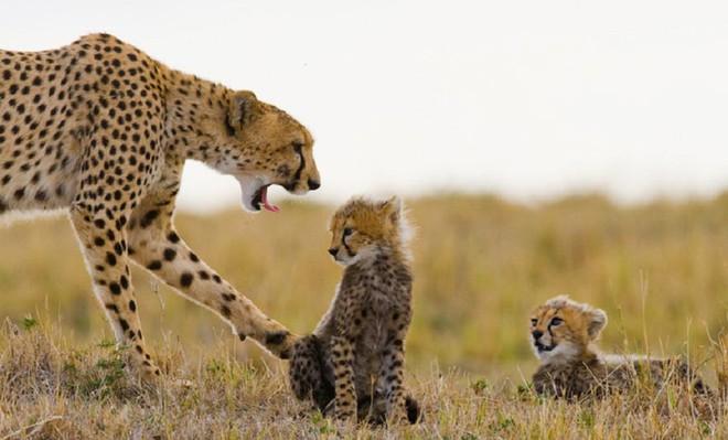 Kỳ công săn ảnh động vật hoang dã ở nơi nguy hiểm nhất thế giới - Ảnh 5.