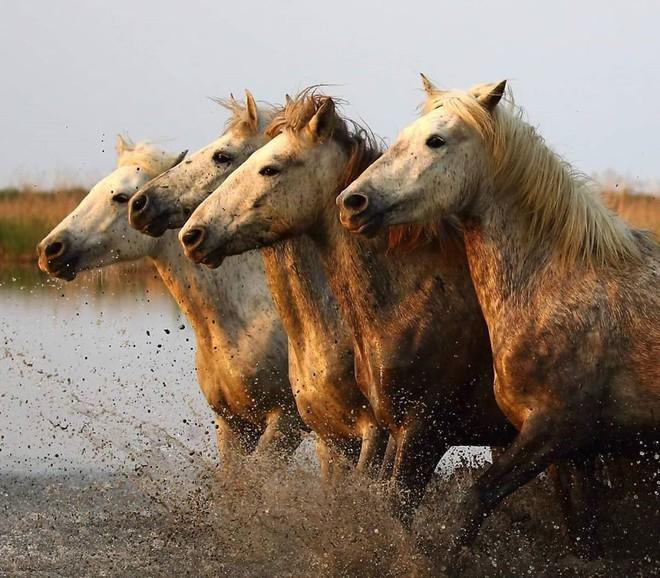 Kỳ công săn ảnh động vật hoang dã ở nơi nguy hiểm nhất thế giới - Ảnh 6.