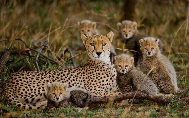 Kỳ công săn ảnh động vật hoang dã ở nơi nguy hiểm nhất thế giới - Ảnh 7.